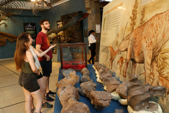 Fossils of a newly identified dinosaur, in Buenos Aires, Argentina