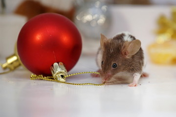 2020 Mascots: Mouse or Rat. New Year pictures. Chinese horoscope