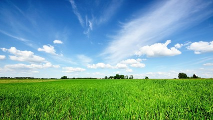 Foto auf AluDibond Kultur classic rural landscape. Green field against blue sky