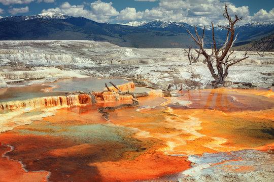 Mammoth Hot Springs, P.N. Yellowstone