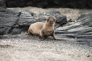 Galapagos Islands Wildlife Landscapes
