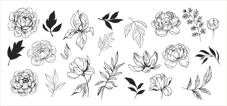 Floral set. Sketches of flowers, plants, leaves. Hand drawn illustration converted to vector. Outline with transparent background