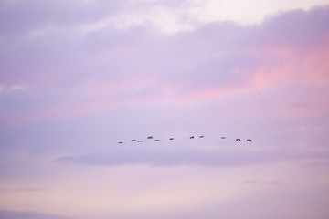 Printed roller blinds Bird cranes flying over sky at sunrise