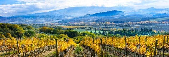 Beautiful Tuscany wine region of Italy. Golden picturesque vineayds