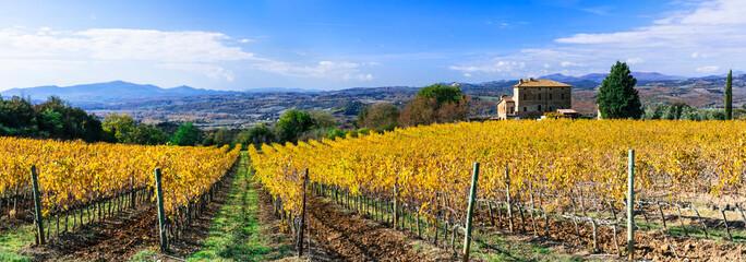 amazing autumn scenery - golden vineyards of Tuscany, famous vine region in Italy