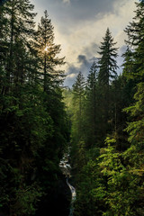 Pine trees on a mountainside in Lynn Canyon Park forest with the sun peeking through on a cloudy day in Vancouver Canada