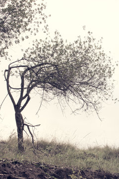The bended small tree