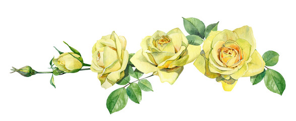Horizontal composition of watercolor yellow roses.