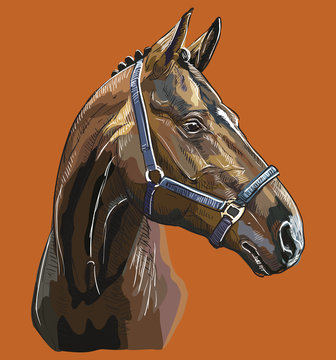 Hand drawing horse portrait vector 27
