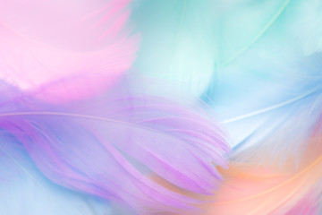 pastel colour feather abstract background