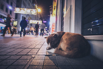 A stray abandoned dog during the night on the busy city street in Istanbul. People walking past the...