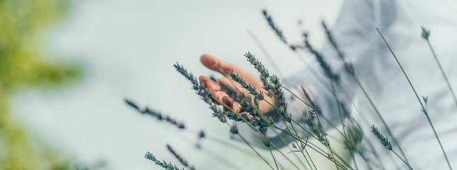 Fototapeta Abundance Feeling.  Mindful Middle-aged Woman Touching Lavender Flowers, Feeling Thankful obraz
