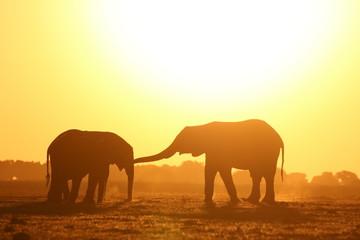 Foto auf Acrylglas Gelb Schwefelsäure Elepahnt in the Afican sunset