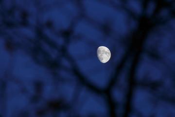 Luna creciente brillando a través de las ramas de un árbol en la noche.