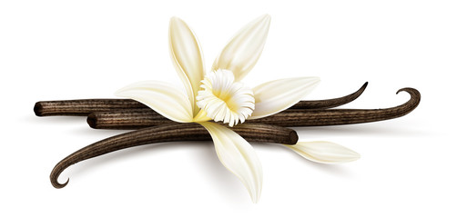 Vanilla flower with dried vanilla sticks and petal. Realistic food cooking condiment. Aromatic seasoning ingredient for cookery and sweet baking, Isolated white background. Eps10 vector illustration. Wall mural