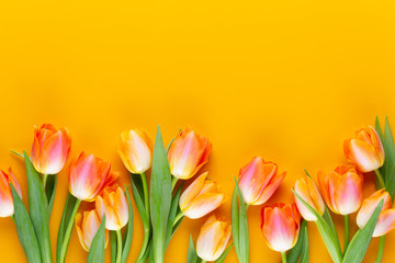 Photo sur Aluminium Tulip Yellow pastels color tulips on yellow background.
