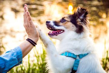 Przybij piątkę - pies podaje łapę opiekunowi Fotobehang