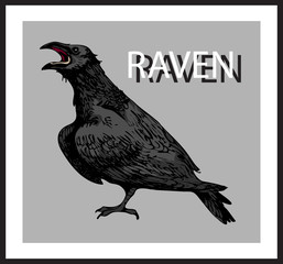 vector image of a black raven with the inscription raven in the style of art sketching pictures in a frame