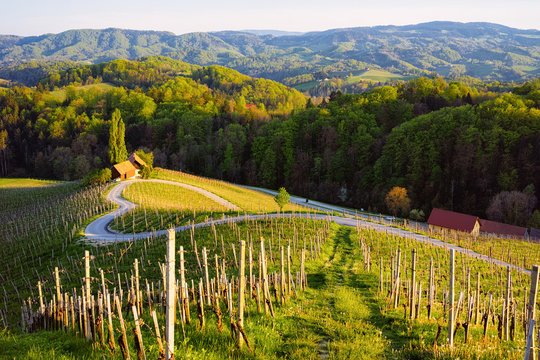 Famous Slovenian and Austrian heart shape wine road among vineyards in Slovenia. Scenic landscape and nature near Maribor in Slovenija. Unique tourism on green hills.