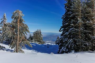 Winter landscape of Vitosha Mountain, Bulgaria