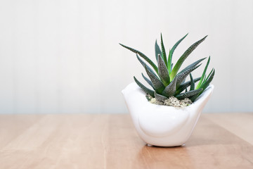 Dark green plant in white pot and white background Wall mural