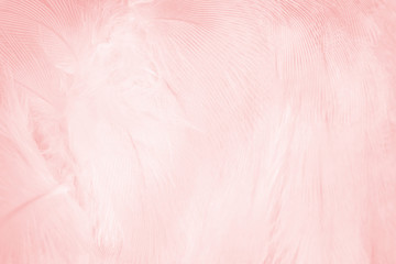 Wall Mural - Beautiful line soft pink feather pattern texture background