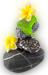 flowers and stones on white background
