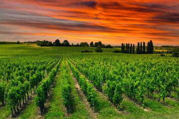 Papiers peints Vignoble Beautiful vineyard at sunset. Travel around Tuscany, Italy