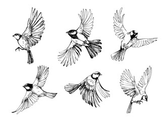 Set of flying birds. Titmouse sketch. Outrline with transparent background. Hand drawn illustration converted to vector Fotomurales
