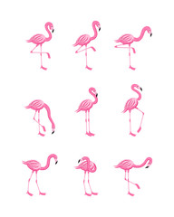 Tuinposter Flamingo Set of pink flamingo in various poses flat cartoon vector illustration isolated.