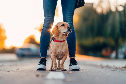 Dog standing between owners legs