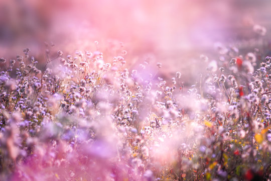 beautiful grass flower in soft pink romance background with light leaks at sunrise