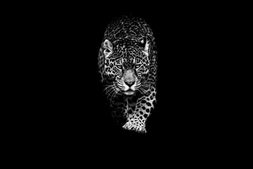 Poster Panther Jaguar with a black background