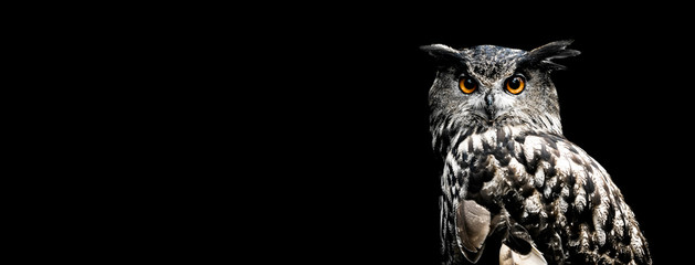 Poster de jardin Chouette Eurasian eagle owl with a black background