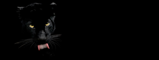 Poster Panther Black panther with a black background