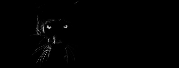 Keuken foto achterwand Panter Black panther with a black background