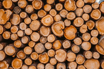 Background of cut logs