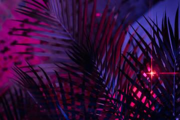 tiki tropical theme palm tree