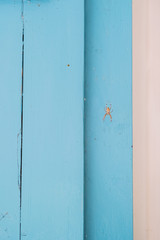 Small spider on a blue wall