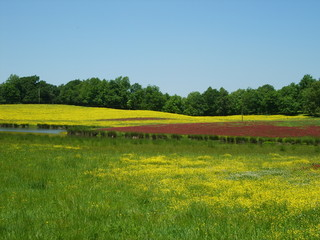 Yellow and red wildflowers bloom in an Arkansas pasture
