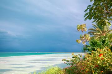 Fototapete - Tropical Paradise. Palm trees on the beach of the Dead Sea. Dead Sea Coast with Tropical Plants. Tropical nature landscape