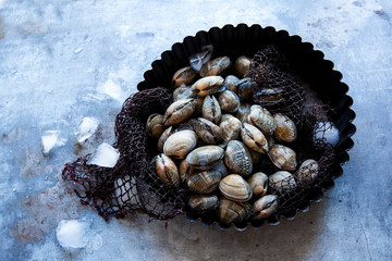 Harvested clams on ice