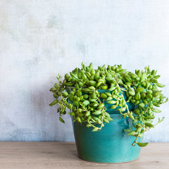 Potted plant for the home