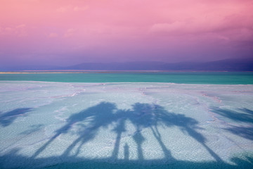 Fototapete - The texture of the Dead Sea. Salty sea shore background. The shadow of palm trees on the salty shore of the Dead Sea
