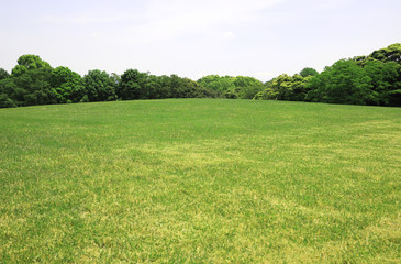 Fond de hotte en verre imprimé Pistache 新緑 新緑の芝生広場 新緑の草原 芝生広場 草原