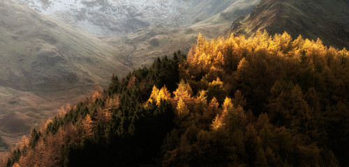 Foto op Aluminium Chocoladebruin Beautiful landscape image of Autumn Fall with vibrant pine and larch trees against majestic setting of Hawes Water and High Stile peak in Lake District