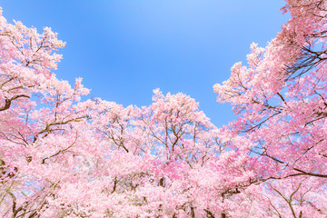 Flower, Branch, Blossom