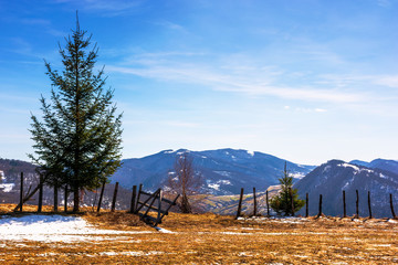 spruce trees on the mountain hill. early springtime sunny weather with clouds on the sky. snow and grass on the meadow. valley and ridge in the distance