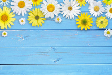 White and yellow daisy flowers on blue wooden table background. Beautiful spring composition, template for design, with copy space for text.