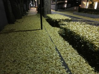 Yellow Ginkgo Leaves on Path